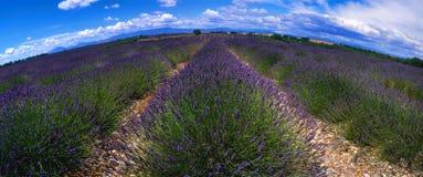 Provence - campo da alfazema fotografia de stock royalty free