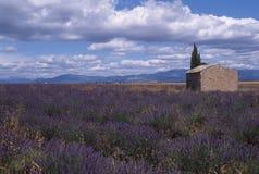 Provence - campo de la lavanda imagen de archivo