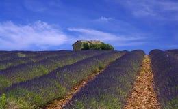 Provence, campo de la lavanda Imágenes de archivo libres de regalías