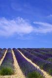 Provence, campo de la lavanda Foto de archivo