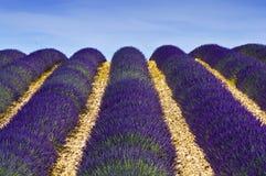 Provence, campo de la lavanda Foto de archivo libre de regalías