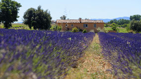 Provence. A field of lavender and a distant building in Provence Stock Image