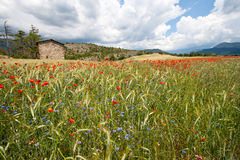 Provence - France stock images
