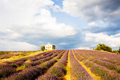 Provence, France. Chapel with lavender field, Plateau de Valensole, Provence, France Stock Images