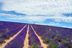Provence, France Imagens de Stock