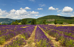 Provence. France. Royalty Free Stock Image