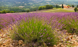 Provence, France. Royalty Free Stock Photos