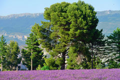 Provence, France Royalty Free Stock Photo