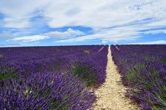Provence, Frankreich, Lavendelfeld Lizenzfreie Stockbilder