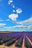 Provence, Frankreich, Lavendelfeld Stockfoto