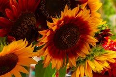 Provence fresh sunflowers Royalty Free Stock Photography