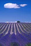 Provence - Hill of lavender. A field of lavender and clouds in Valensole, in the south of France Royalty Free Stock Photos