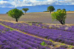 Provence krajobraz Obrazy Royalty Free