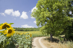 Provence landscape Royalty Free Stock Images