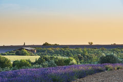 Provence landscape. At sunset, South of France Royalty Free Stock Photography