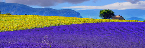 Provence lantligt landskap Arkivfoton