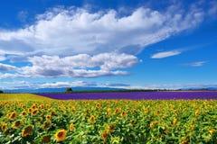 Provence lantligt landskap, Frankrike Royaltyfria Bilder