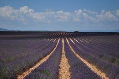 Provence-Lavendel Lizenzfreies Stockfoto