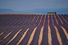 Provence-Lavendel Lizenzfreie Stockbilder