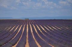 Provence-Lavendel Lizenzfreie Stockfotografie