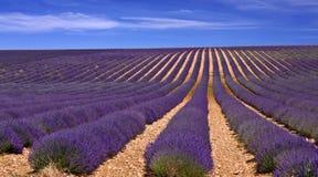 Provence lavendelfält Royaltyfri Foto