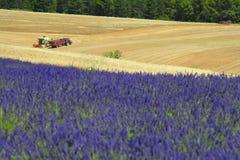 Provence-Lavendelfeld Stockfotos