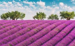 Provence-Lavendelfeld mit blauem Himmel und Wolken Stockfotografie