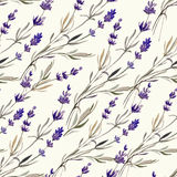 Provence lavender decor4. Provence lavender pattern decor flowers vector colored Royalty Free Stock Photos