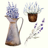 Provence lavender decor1. Provence lavender pattern decor flowers vector colored Royalty Free Stock Photography
