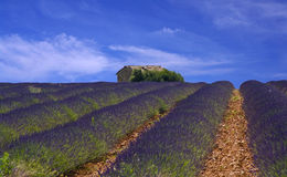 Provence,lavender field. A nice view of a lavender field Royalty Free Stock Images