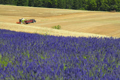 Provence lavender field Stock Photos