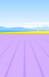 Provence lavender field Royalty Free Stock Photography