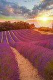 Provence with Lavender field at sunset, Valensole Plateau area in south of France Stock Image