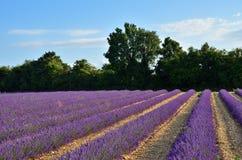 Provence lavender fields, France Stock Photo