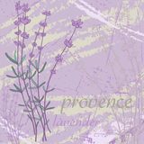 Provence. Lavender. Stock Photo