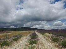Provence lawendy pole Zdjęcie Stock