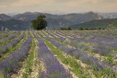 Provence-Panorama Lizenzfreie Stockfotos