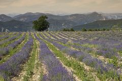 Provence panorama Royalty Free Stock Photos