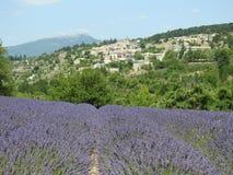 Provence que vive con el aroma de la lavanda foto de archivo