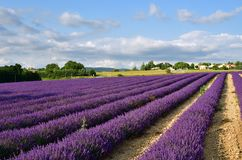 Provence rural landscape, France Royalty Free Stock Image