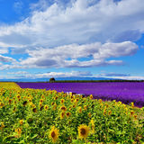 Provence rural landscape, France Stock Photos
