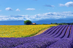 Provence rural landscape Royalty Free Stock Photography