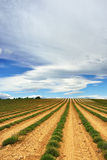 Provence rural landscape Royalty Free Stock Image