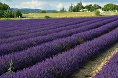 Provence rural landscape. Stunning landscape with lavender field at evening. Plateau of Sault, Provence, France Stock Images