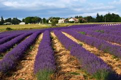 Provence rural landscape. Stunning landscape with lavender field at evening. Plateau of Sault, Provence, France Royalty Free Stock Photo