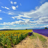 Provence rural landscape Stock Photography