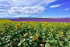 Provence rural landscape Stock Image