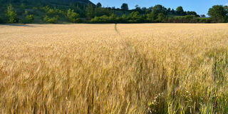 Provence rural landscape Royalty Free Stock Images