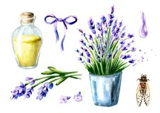 Provence summer and Lavender set. Watercolor hand drawn vertical illustration, isolated on white background. Provence summer and Lavender set. Watercolor hand stock photo