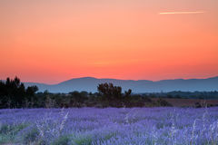 Provence sunrise. Sunrise over a summer lavender field in Provence, France Stock Photography